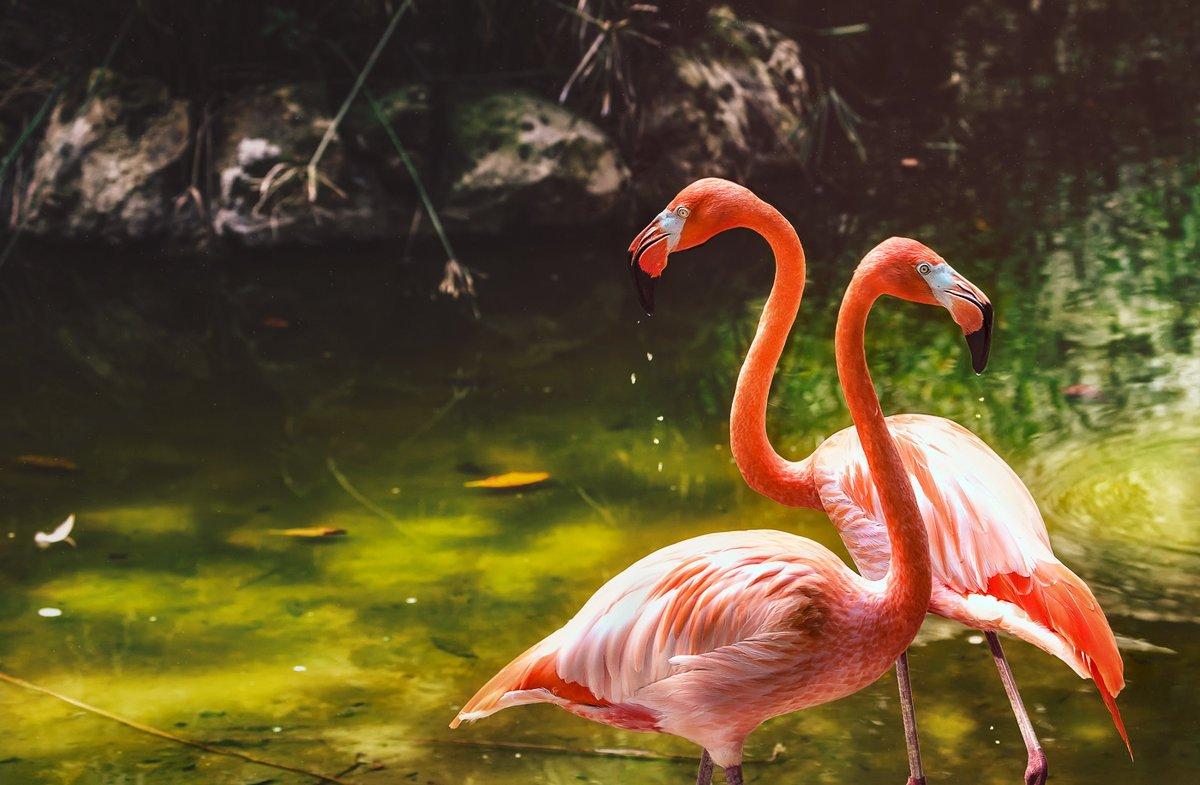 В парке Шкарет обитают розовые фламинго
