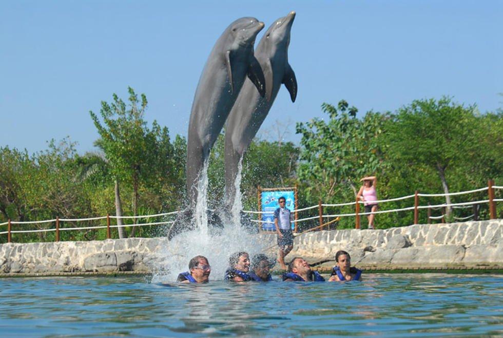 Дельфины в Парке Шель Ха