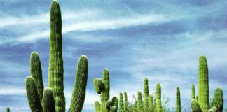 Кактусы Мексики