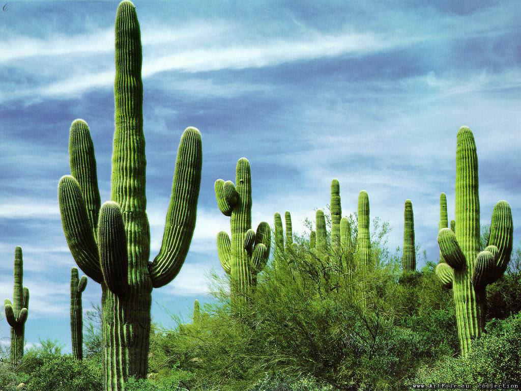 растения северной америки фото с названиями клуб рубиновой экипировке
