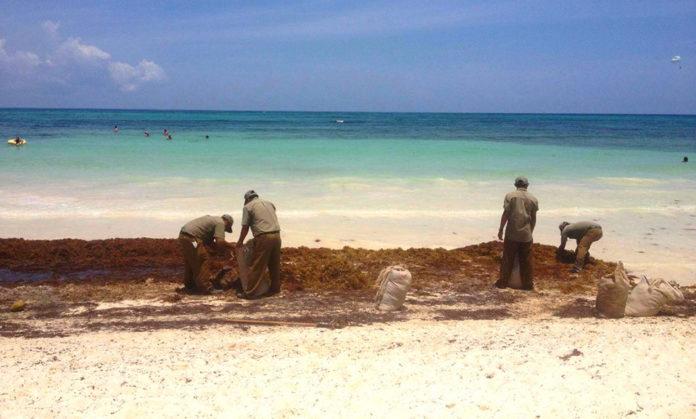 В Мексике устанавливают защиту от наплыва водорослей